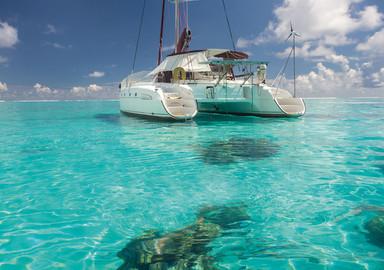 Suricat à Bora Bora : on adore, et on aime moins…