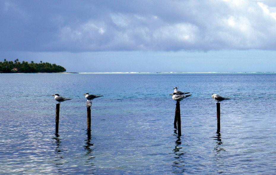 Chronique autour du monde : archipel de la Société