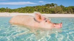 Les Bahamas, 700 îles rien que pour vous…